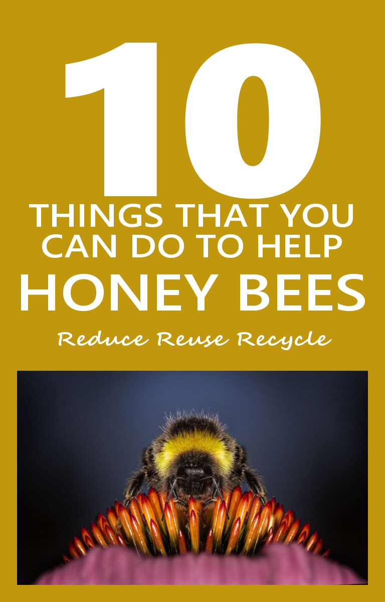 Ten Things You Can Do To Help Honey Bees
